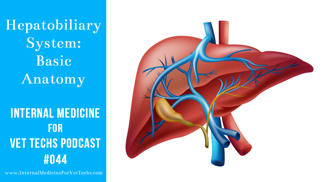 Internal Medicine For Vet Techs podcast hepatobiliary system basic anatomy in canine and feline patients