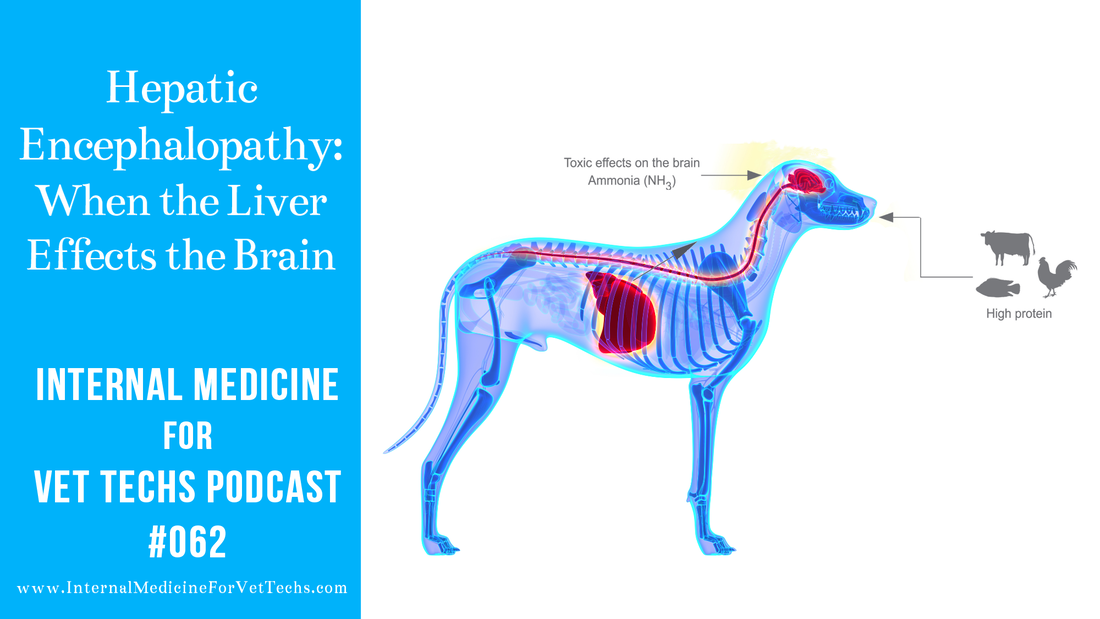Hepatic Encephalopathy When the Liver Effects the Brain Internal Medicine For Vet Techs Podcast veterinary medicine
